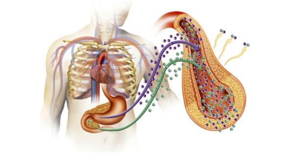 Úloha inzulínu